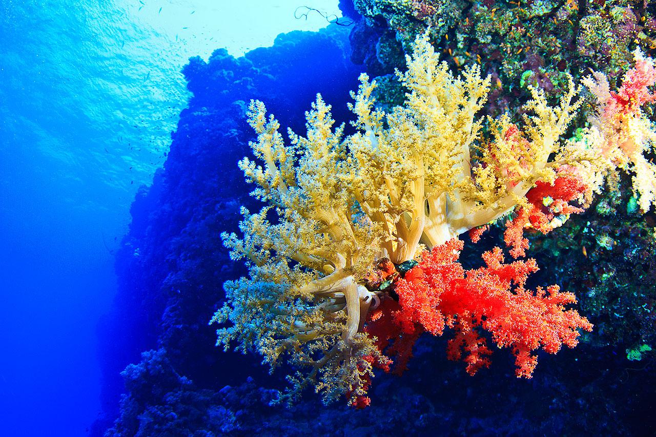 Mehlwürmer Bekämpfung unterwasser fotowelten part 2