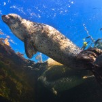 Seehunde so schnell – Rostock – Ostsee